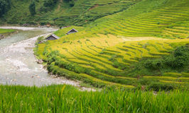 Rice plantation Royalty Free Stock Photo