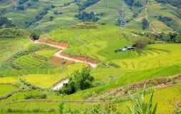 Rice plantation Stock Photography