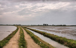 Rice plantation Royalty Free Stock Image