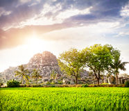 Rice plantation in Hampi Royalty Free Stock Photos