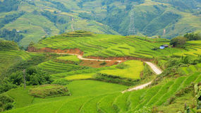 Rice plantation hill stock image