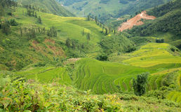 Rice plantation in Sapa. Top view of rice terraces with typical houses in vietnam Royalty Free Stock Images