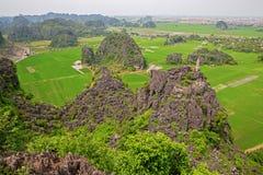 Rice plantations Stock Photography