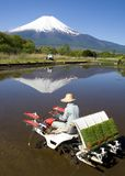 The Rice Planter Stock Photo
