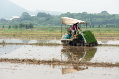The Rice Planter. Modern rice planting in china Royalty Free Stock Photo