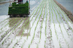 The Rice Planter. Modern rice planting in china Stock Photo