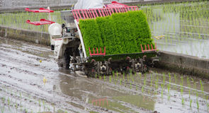 Rice planting by machine. Rice planting by rice transplanter in Japan Royalty Free Stock Image