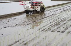 Rice planting by machine Stock Image