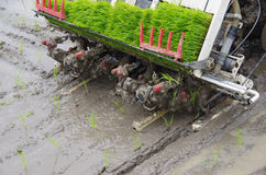 Rice planting by machine Royalty Free Stock Image