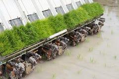 Rice planting machine. Transplant rice seedling on paddy field b. Rice planting machine. Transplant young rice seedling on paddy field by transplanter Royalty Free Stock Image