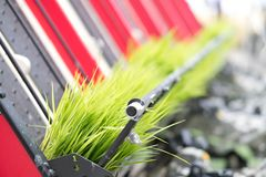 Rice planting machine. Transplant rice seedling on paddy field b. Rice planting machine. Transplant young rice seedling on paddy field by transplanter Stock Image