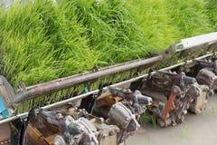 Rice planting machine. Transplant rice seedling on paddy field b. Rice planting machine. Transplant young rice seedling on paddy field by transplanter Royalty Free Stock Photos