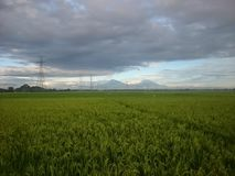 rice plants in the fields and twin mountain stock image
