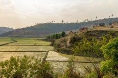 Rice pola i wylesienie, Madagascar Zdjęcie Stock