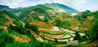 Rice pola na tarasach przy flancowaniem w Wietnam Zdjęcia Royalty Free