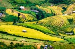 Rice pola na tarasowatym Mu Cang Chai, YenBai, Wietnam Zdjęcie Royalty Free