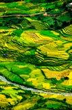 Rice pola na tarasowatym Mu Cang Chai, YenBai, Wietnam Obrazy Stock