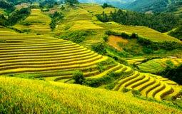 Rice pola na tarasowatym Mu Cang Chai, YenBai, Wietnam Zdjęcia Stock