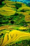 Rice pola na tarasowatym Mu Cang Chai, YenBai, Wietnam Zdjęcia Royalty Free