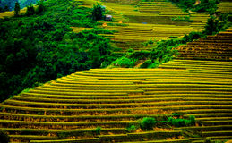Rice pola na tarasowatym Mu Cang Chai, YenBai, Wietnam Obraz Stock