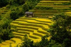 Rice pola na tarasowatym Mu Cang Chai, YenBai, Wietnam Fotografia Royalty Free