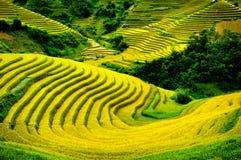 Rice pola na tarasowatym Mu Cang Chai, YenBai, Wietnam Zdjęcie Stock