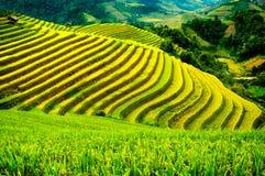 Rice pola na tarasowatym Mu Cang Chai, YenBai, Wietnam Fotografia Stock