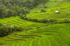 Rice pola na tarasowatym Mu Cang Chai, YenBai, Wietnam Rice f Zdjęcie Royalty Free