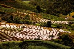 Rice pola na tarasowatym Pa Pong Pieng, Mae Chaem, Chiang Mai, Zdjęcie Royalty Free