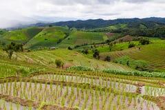 Rice pola na tarasowatym Pa Pong Pieng, Mae Chaem, Chiang Mai, Zdjęcia Stock