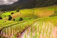 Rice pola na tarasowatym Pa Pong Pieng, Mae Chaem, Chiang Mai, Zdjęcie Stock
