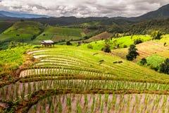 Rice pola na tarasowatym Pa Pong Pieng, Mae Chaem, Chiang Mai, Obraz Royalty Free