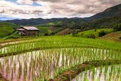 Rice pola na tarasowatym Pa Pong Pieng, Mae Chaem, Chiang Mai, Fotografia Royalty Free