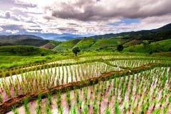 Rice pola na tarasowatym Pa Pong Pieng, Mae Chaem, Chiang Mai, Fotografia Stock