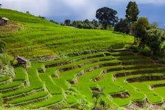 Rice pola na tarasowatym Pa Pong Pieng, Mae Chaem, Chiang Mai, Obrazy Stock