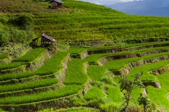 Rice pola na tarasowatym Pa Pong Pieng, Mae Chaem, Chiang Mai, Zdjęcia Royalty Free