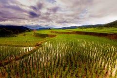 Rice pola na tarasowatym Pa Pong Pieng, Mae Chaem, Chiang Mai, Obrazy Royalty Free