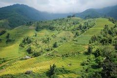 Rice pola na tarasowatym Sapa, Sapa okręg, Lao Cai prowincja, północny zachód Wietnam Zdjęcia Royalty Free