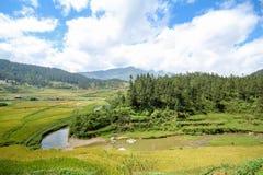 Rice pola na tarasowatym Sapa, Sapa okręg, Lao Cai prowincja, północny zachód Wietnam Zdjęcia Stock