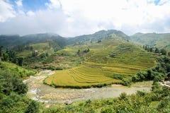 Rice pola na tarasowatym Sapa, Sapa okręg, Lao Cai prowincja, północny zachód Wietnam Obrazy Stock