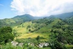 Rice pola na tarasowatym Sapa, Sapa okręg, Lao Cai prowincja, północny zachód Wietnam Zdjęcie Royalty Free