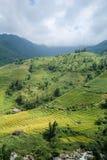 Rice pola na tarasowatym Sapa, Sapa okręg, Lao Cai prowincja, północny zachód Wietnam Fotografia Royalty Free