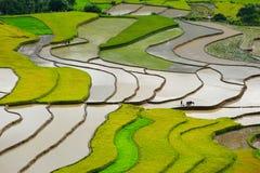 Rice pola na tarasowatym w rainny sezonie przy Tu Le Wioska, jen Bai, Wietnam Fotografia Stock