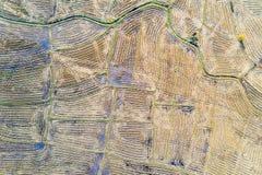 Rice pola po żniwa zdjęcia stock