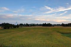 Rice pola przy Tissamaharama w Sri Lanka Zdjęcia Royalty Free