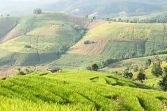Rice pola taras z chałupą przy Mae dżemem, Chiangmai, Tajlandia Fotografia Royalty Free