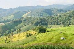 Rice pola taras z chałupą przy Mae dżemem, Chiangmai, Tajlandia Zdjęcia Royalty Free