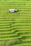 Rice pola taras z chałupą przy Mae dżemem, Chiangmai, Tajlandia Obraz Royalty Free