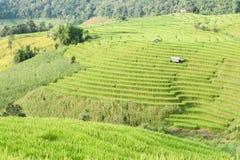 Rice pola taras z chałupą przy Mae dżemem, Chiangmai, Tajlandia Obraz Stock
