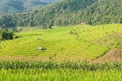 Rice pola taras z chałupą przy Mae dżemem, Chiangmai, Tajlandia Zdjęcie Stock